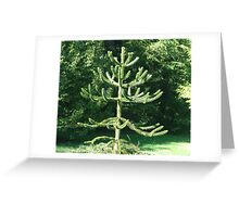 Monkey Puzzle Tree Greeting Card