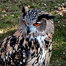 Merlino - Eagle-Owl by sstarlightss