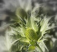 Thistle... by Larry Llewellyn