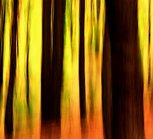In the forest #1 by Bob Johnson