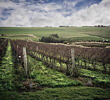 vinyards by Jose Fernandez