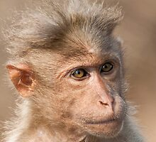 Bonnet Macaque Portrait by Nickolay Stanev