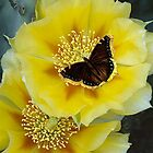 Beautiful Cactus Flower and a Butterfly attached by Roberta  Barnes
