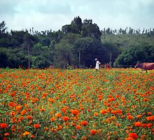Marigold fields, marshmallow skies ... a farmer and his cow. by Vikram Franklin