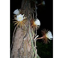 """""""Queen of the Night"""" Photographic Print"""