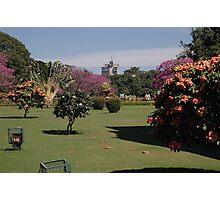 Cubbon Park, Bangaluru Photographic Print