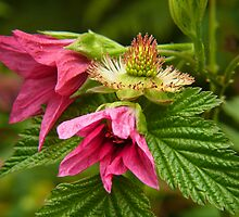 salmonberry three by VickiOBrien