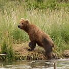 Posing Brown Bear by Gina Ruttle  (Whalegeek)
