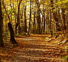 Leaf-Blanketed Trail by Michael Lewis