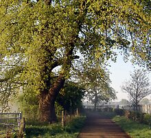 My Morning Walk To Work by George Swann