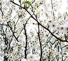 Popcorn Tree by Sophie Gonin