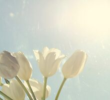 Tulips And Blue Sky by Kristybee