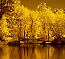 Autumn in IR by Hans Kawitzki