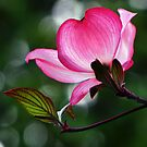 Glowing Dogwood by LudaNayvelt