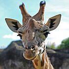 Smiling Giraffe  by Mark Whittle