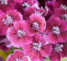 Purple Flowers by Adam Neitzke