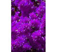 Begonia Flowers Photographic Print