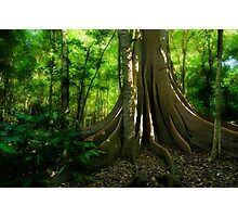 Fig Forest Photographic Print