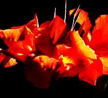 Fiery flowers by helenrose