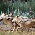 Running with the pack by laureenr