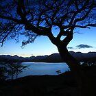tree silhouette by loch quoich. by highlandscot