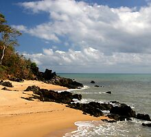 Palm Cove by Dave Law