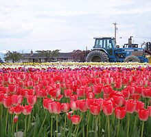 Tulips and tractors by Dorthy Ottaway
