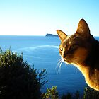 Zaki Lazuli Not Shopped Blue Abyssinian Cat and Ocean by Vicktorya Stone