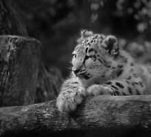 Cub in Black and White 5 by DanielTMiller