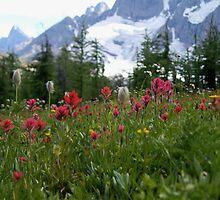 Alpine Flowers by maiamedia