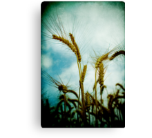 harvest time again Canvas Print