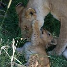 Lioness and cub by Angela1