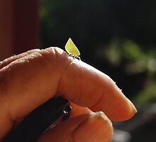 Leaf hopper? by cradlemountain