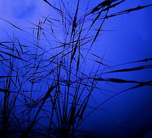BLUE GRASS by NAGILLAH