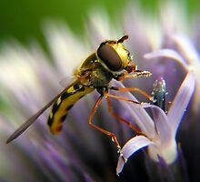 Hoverfly by ralphdot