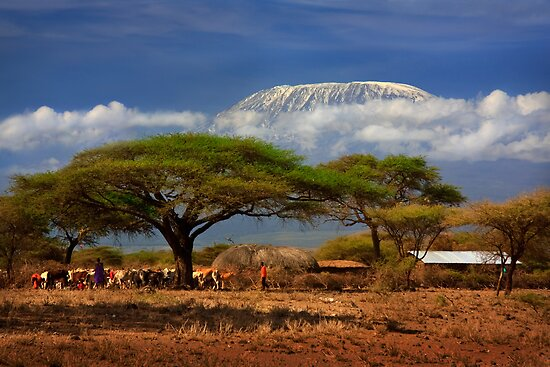 Kilimanjaro, and the Acacia Trees. Kenya, Africa. by photosecosse /barbara jones