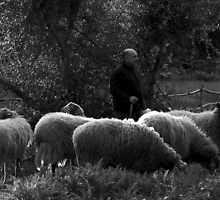 THE GOOD SHEPHERD by RayFarrugia