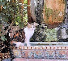 Hemingway Cat by Will Harper