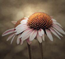 Just A Pretty Flower by CarolM