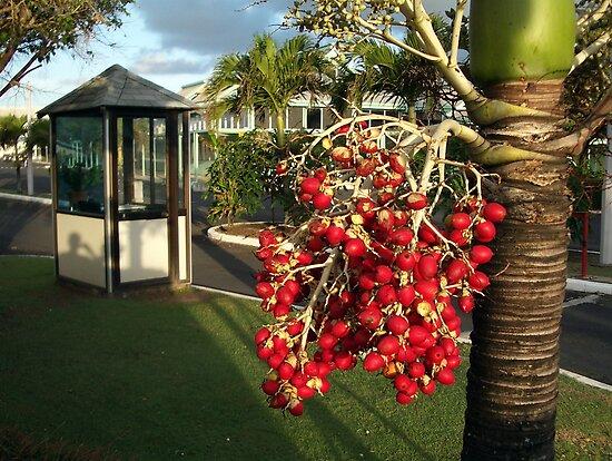 Tropical berries by zsaleeba