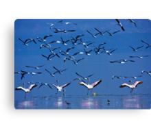 Flamingos in Flight, Lake Nakuru National Park, Kenya, Africa. Canvas Print