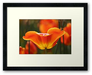 Tulip by Jeanne Horak-Druiff