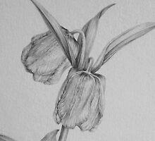 Fritillaria pallidiflora by diannes