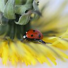 Ladybug and Dandelion by Nancy Lovering