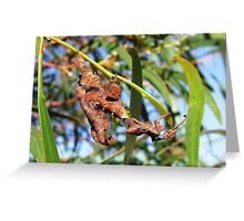 spiny stick insect Greeting Card