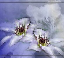 Clematis Blue Moon by Carmen Holly