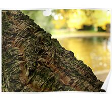 Cork Tree in Autumn the Salmon Ponds, Tasmania Poster