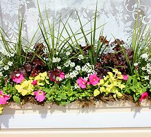 Window Box by Rachel Stickney