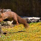 Flying Squirrel by seawhisper