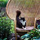 Bird Watcher by Sharon Morris